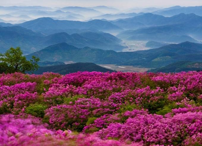 남한 지리산  철쭉.jpg