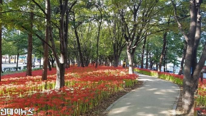 눈으로 즐기는 가을, 꽃무릇 꽃길, 멈추지 말고 걸으세요.jpg