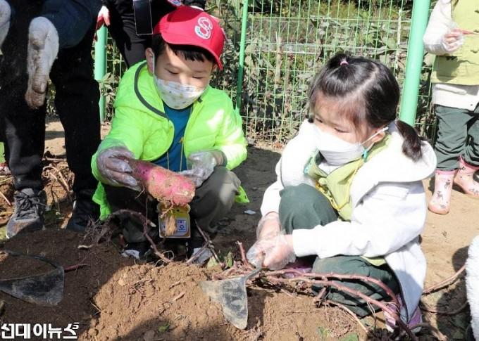 20201023[금천포토]아이들과 함께하는 고구마캐기 체험 행사(사진1)1111.jpg
