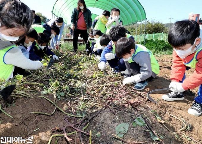 20201023[금천포토]아이들과 함께하는 고구마캐기 체험 행사(사진2)222.jpg