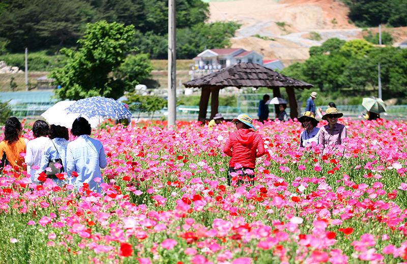 '왕의 茶 세계로'하동야생차문화축제 팡파르