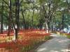 눈으로 즐기는 가을, 꽃무릇 꽃길, 멈추지 말고 걸으세요