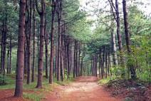 서울대공원, '4종 산림치유 프로그램' 운영 개시