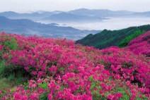 [청로 이용웅 칼럼]북한 달력 2021년 4월과 북한의 '붉은 꽃'과 진달래꽃