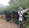 영농철 매실수확 일손돕기 지원