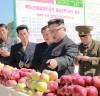 [청로 이용웅 칼럼] 김일성이 명명(命名)한 북한 '과일군'을 방문한 김정은 위원장
