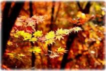 [청로 이용웅 칼럼] 아름다운 금수강산(錦繡江山)의 가을 풍경에 대한 斷想