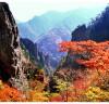 [청로 이용웅 칼럼]2020 북한 달력 ⑩'로동당' 이야기와 금강산의 10월