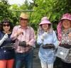 '블랙푸드' 오디, 태안군 농가의 고소득 작물로 인기!
